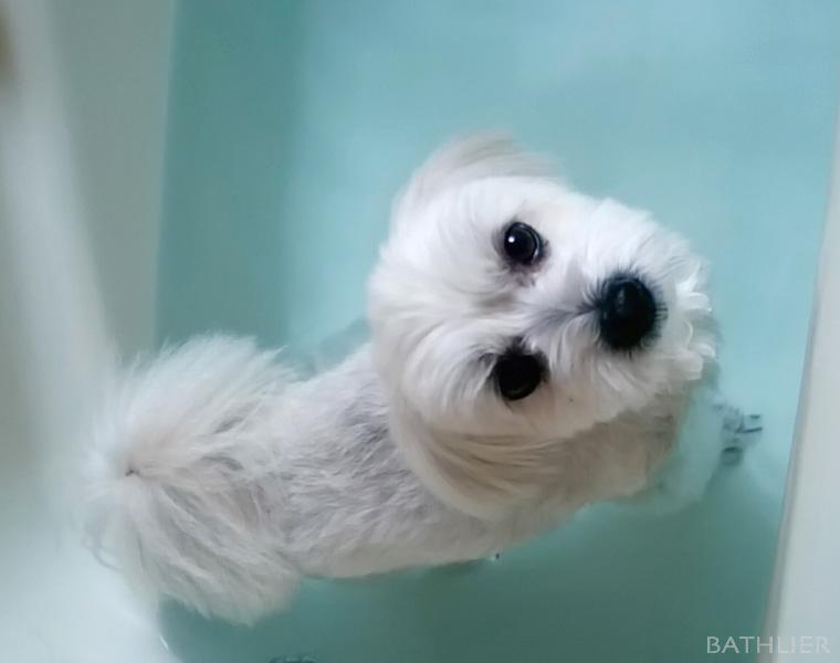 ペットも!快適にお風呂生活