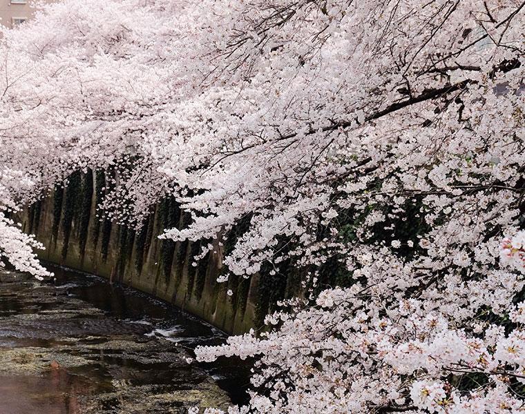 桜は見るだけではもったいない!薬湯に関する意識調査